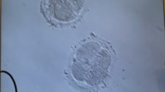 Cellular division of an in vitro fetus under microscope. Generic cell dividing. Stock Footage