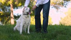 Young man taking old dog with a leash Stock Footage