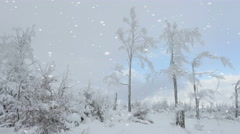 Falling snowflakes on winter woodland Stock Footage