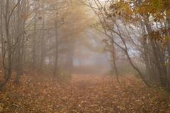 Autumn foggy day - stock photo