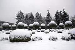 A garden in winter, boxwood and yew trees in the snow. - stock photo