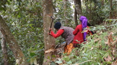 Local women fells tree in the forest, Pokhara, Nepal. Stock Footage