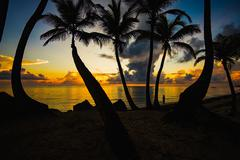 sunset silhouette of palm trees - stock photo