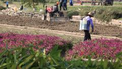 Chinese worker spraying pesticides in wuzhen - stock footage