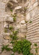 Ancient wall covered with vegetation Stock Photos