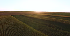 Stock Video Footage of Aerial flight over plant fields  at sunset