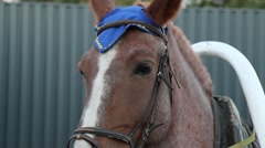 Horse head in harness Stock Footage