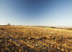 Field with furrows Stock Photos