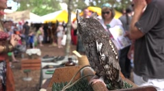 Screech Owl Looking At Crowd Of People At Fair Stock Footage
