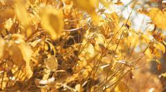 Autumn leaves outdoors - stock photo