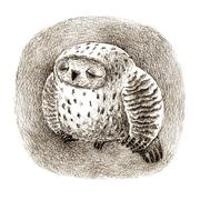 Great Grey Owl Sleeping In a Hollow Stock Illustration