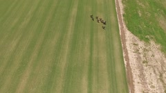 Drone camera polo match aerial pan. Stock Footage