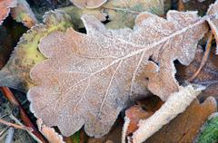 Frozen autumn leafs- abstract natural background Stock Photos
