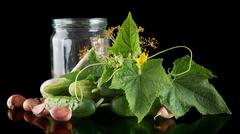 Gherkins in jar preparate for pickling with flower bud,leaves,jar,garlic,dill Stock Photos