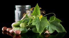 Gherkins in jar preparate for pickling with flower bud,leaves,jar,garlic,dill - stock photo