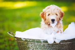 Adorable Cute Young Puppy Stock Photos