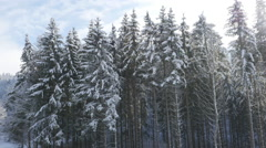 Crane shot of pine trees covered in snow, Burg Hohenzollern, Baden-Wuerttemberg, - stock footage
