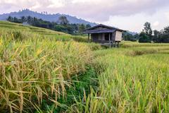 Terraced rice field with  mountain background at Ban Pa Bong Piang, Mae Jam,  - stock photo