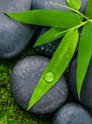 The River Stones spa treatment scene and bamboo leaves with raindrop zen like - stock photo