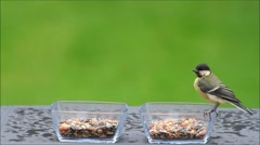 Great tit feeding bird seed from glass bowls, texture Stock Footage