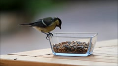 Great tit feeding bird seed from glass bowl, texture Stock Footage