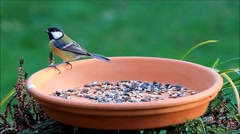 Feeding place terracotta bowl with bird seed Stock Footage