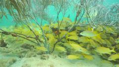Underwater scene shoal of fish below soft coral Stock Footage