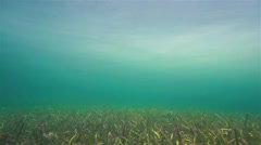 Underwater scene grassy seabed with foggy ambiance - stock footage