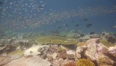 Thousands of colorful tropical reef fish dance over coral Stock Footage