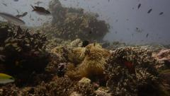 Busy coral reef fish slow motion rise pan Stock Footage