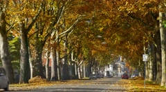 Falling leaves in autumn boulevard street to Eggenberg Palace, Graz, Austria Stock Footage
