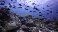 Diverse Tropical Reef Wide Angle Maldives Stock Footage
