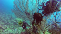 Beautifull big corals on coral reef in Pacific ocean Stock Footage