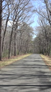 Chancellorsville drive POV Civil War road fast vertical HD Stock Footage