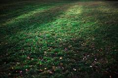 Fairy magic meadow with green grass and flowers. Stock Photos
