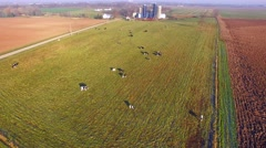 Herd of Cattle Grazing in Wisconsin Dairy Farm Pasture Stock Footage