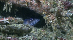 Conger eel juwel and colorfull anemone Stock Footage