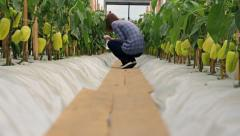 Girl water sprays peppers in greenhouse Stock Footage