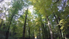 Vehicle shot - avenue in deciduous forest, autumn. low angle Stock Footage