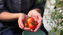 Handful of tomatoes in greenhouse - close up - stock footage