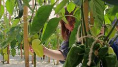 Girl checking peppers in greenhouse - stock footage