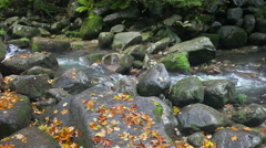 Autumn Stream Stock Footage