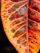 Orange and red leaf - stock photo