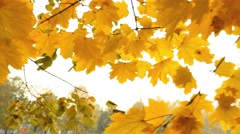 Footage of a fall season, the shot is taken under a colorful tree - stock footage