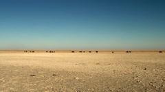 Distant wildebeest in desert landscape Stock Footage