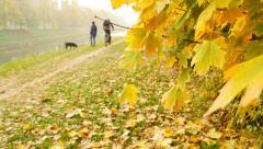 A fall scene with colorful leaves, and some people enjoying in the nature - stock footage