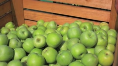 Apples in crates after harvest, farmers picking apples in a orchard - stock footage