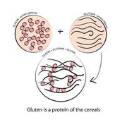 Gluten. Schematic drawing Stock Illustration