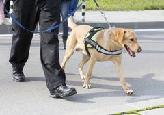 Customs drugs detection dog - stock photo