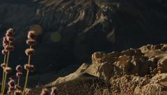 LADAKH LANDSCAPE WITH WILD FLOWER Stock Footage